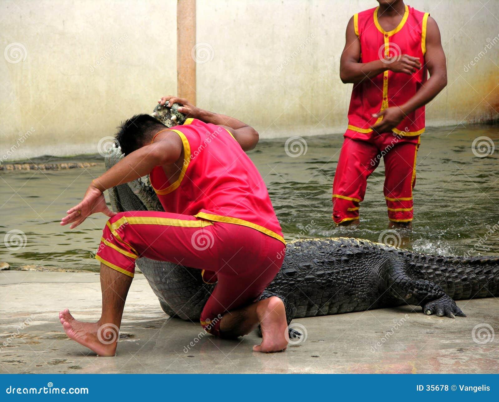 Zoo för lantgård för 3 krokodil samutprakan