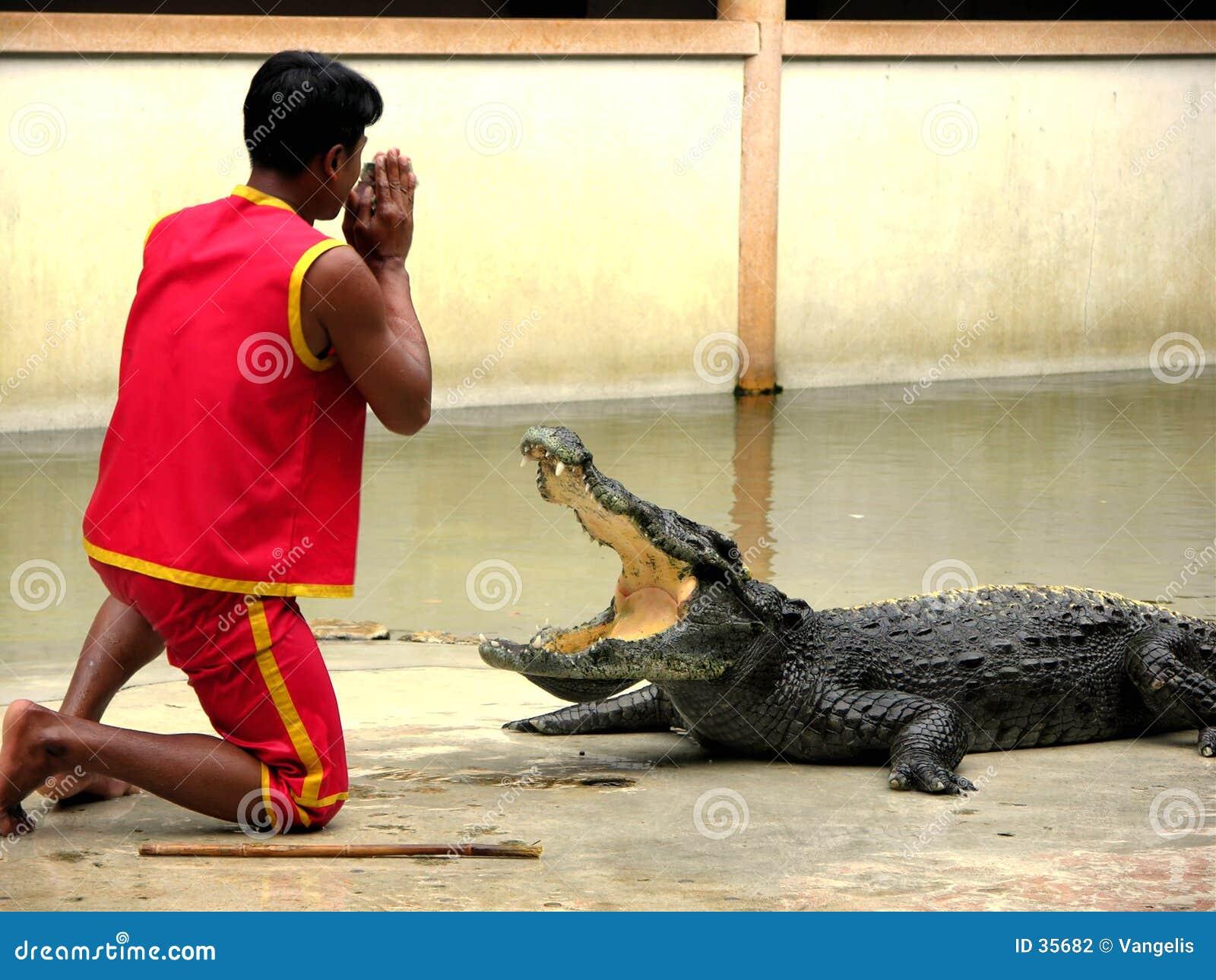 Zoo för lantgård för 4 krokodil samutprakan