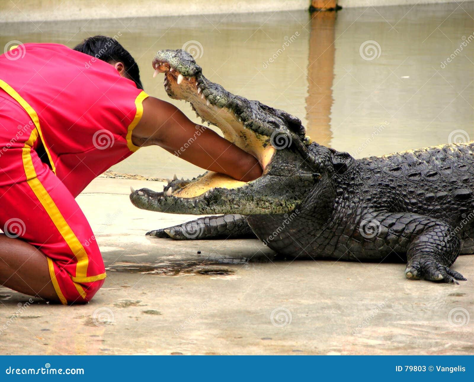 Zoo för lantgård för 5 krokodil samutprakan