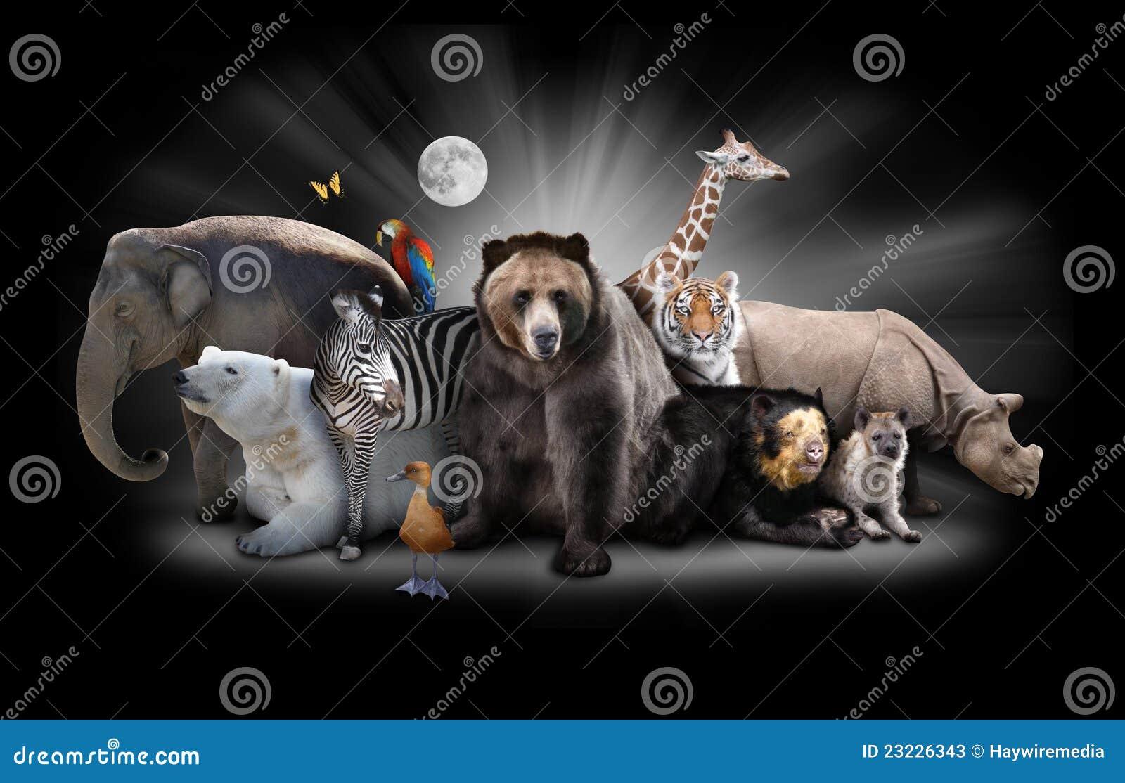 Zoo för natt för djurbakgrundsblack