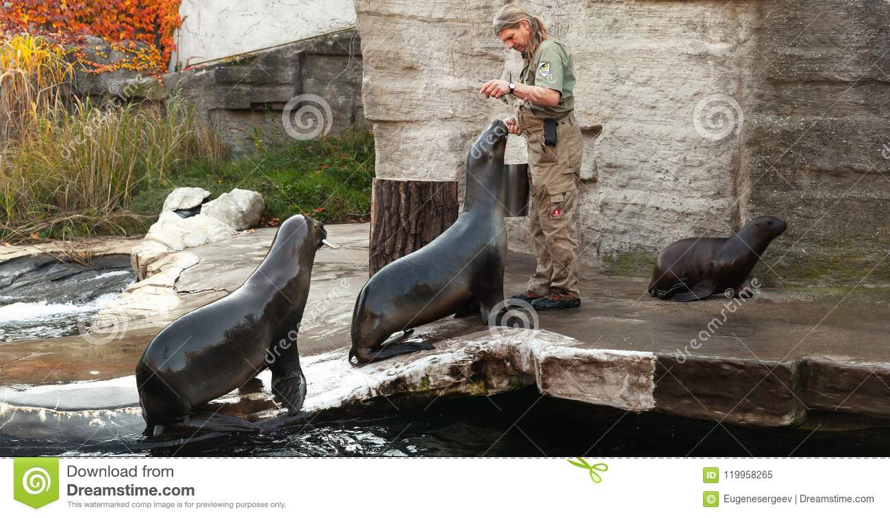 Zoo keeper of the Vienna Zoo feeds sea lions