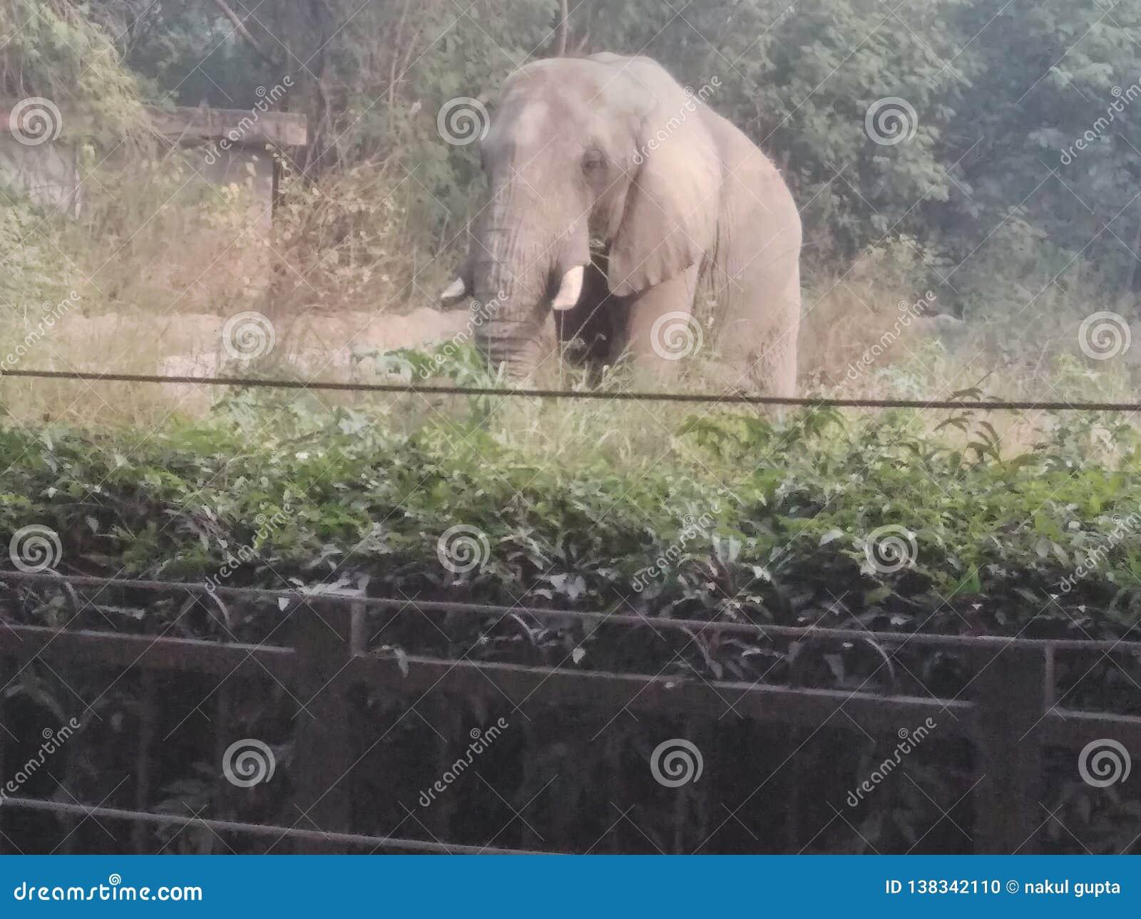 Zoo przejażdżka