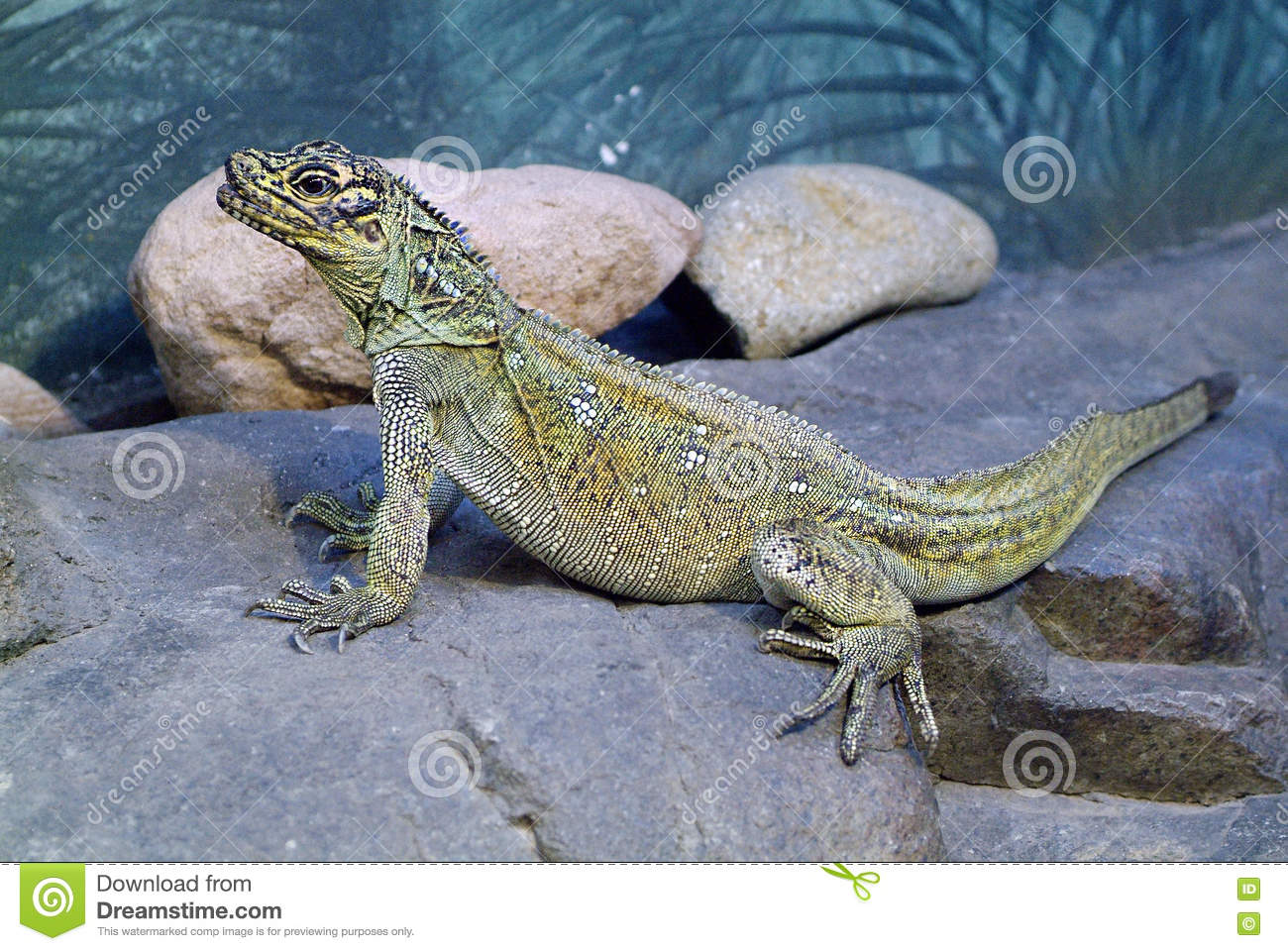 Zoology, reptile
