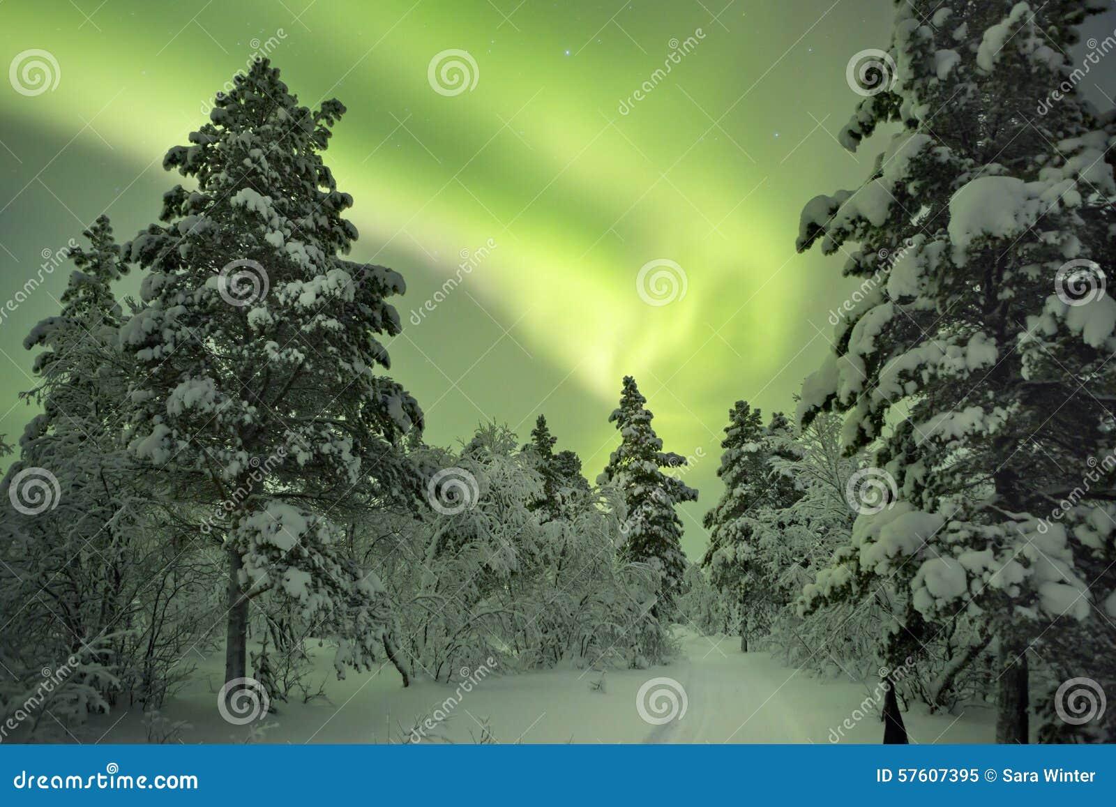 Zorz borealis nad ścieżką przez zima krajobrazu, Fiński los angeles