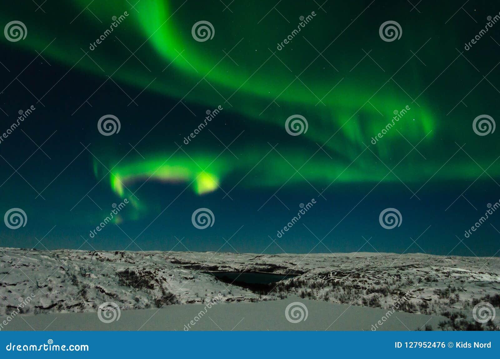 Zorza, północni światła, noc, tundra w zimie