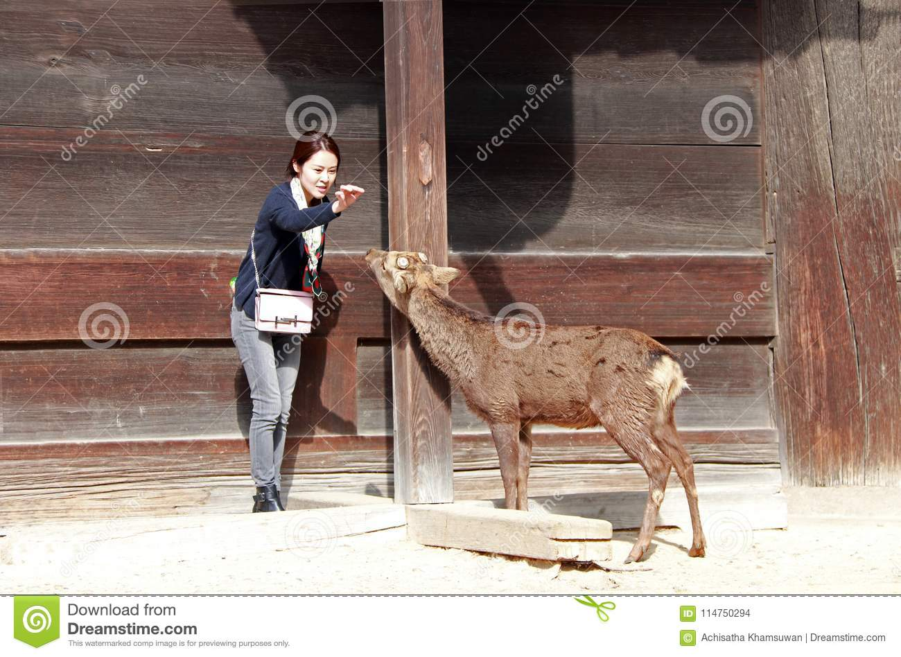 Tourist girl acting to feeding the food for deer on background wooden building in front of Todai-ji temple.