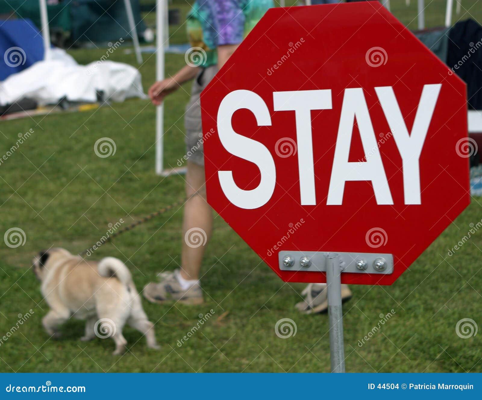 Zostań