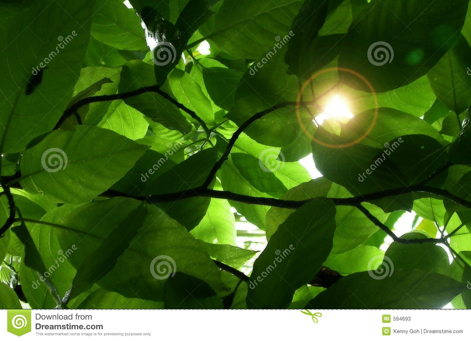 Zostaw światła słonecznego