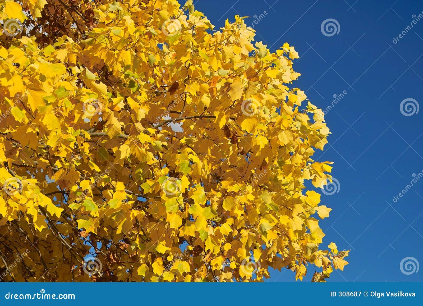 Zostaw błękit nieba żółty