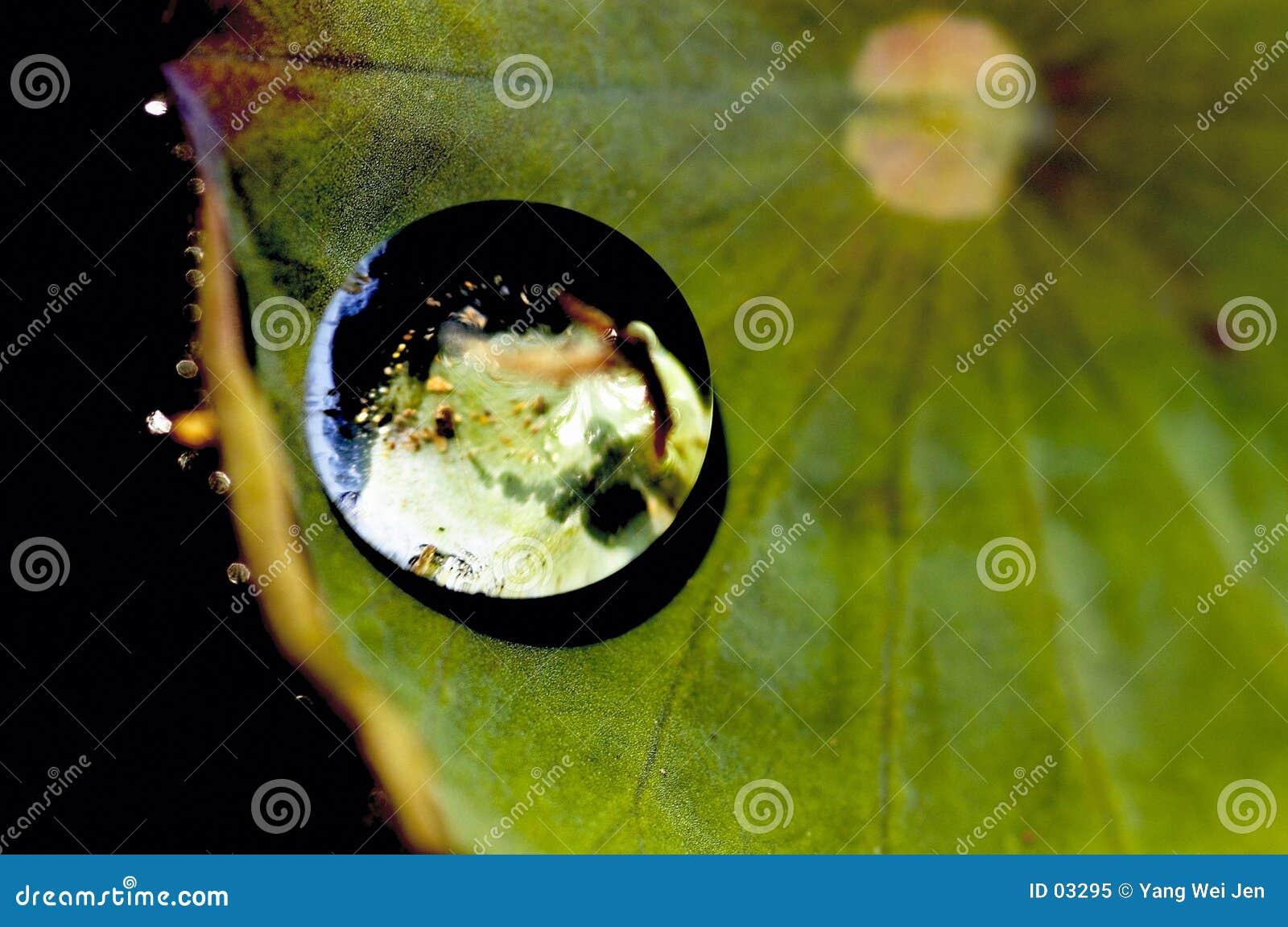 Zostaw lotosu glob