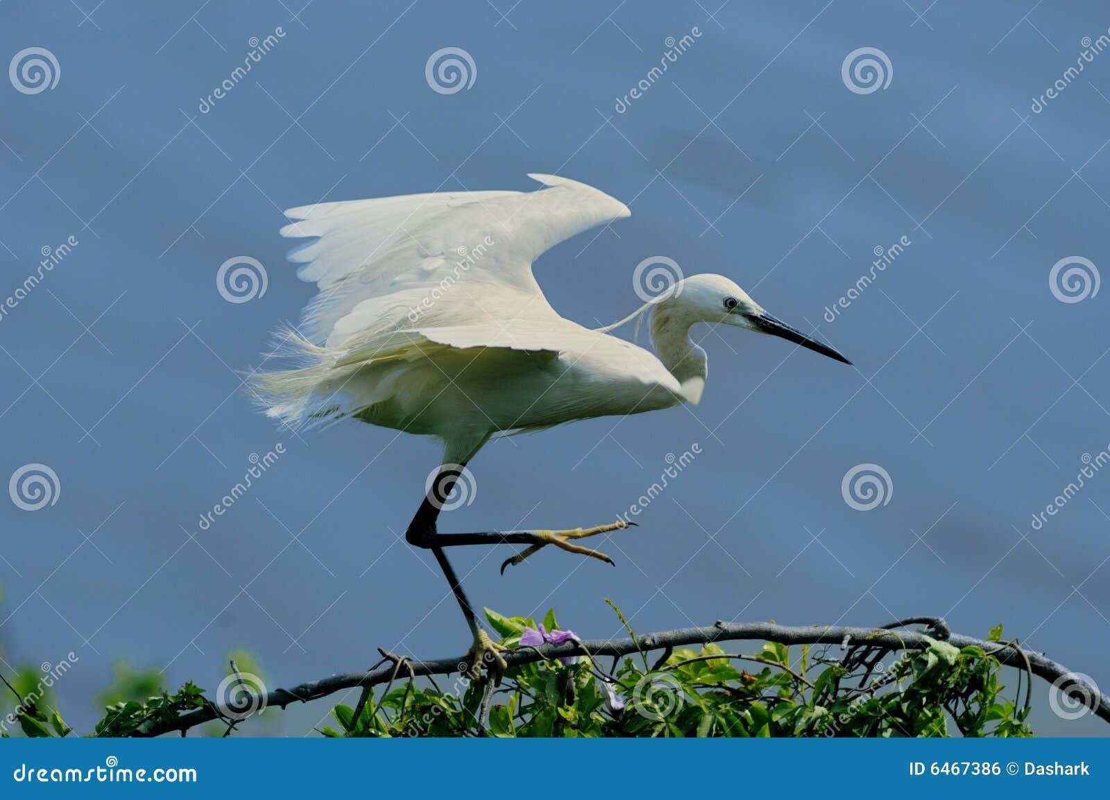 Zostawia ptaka