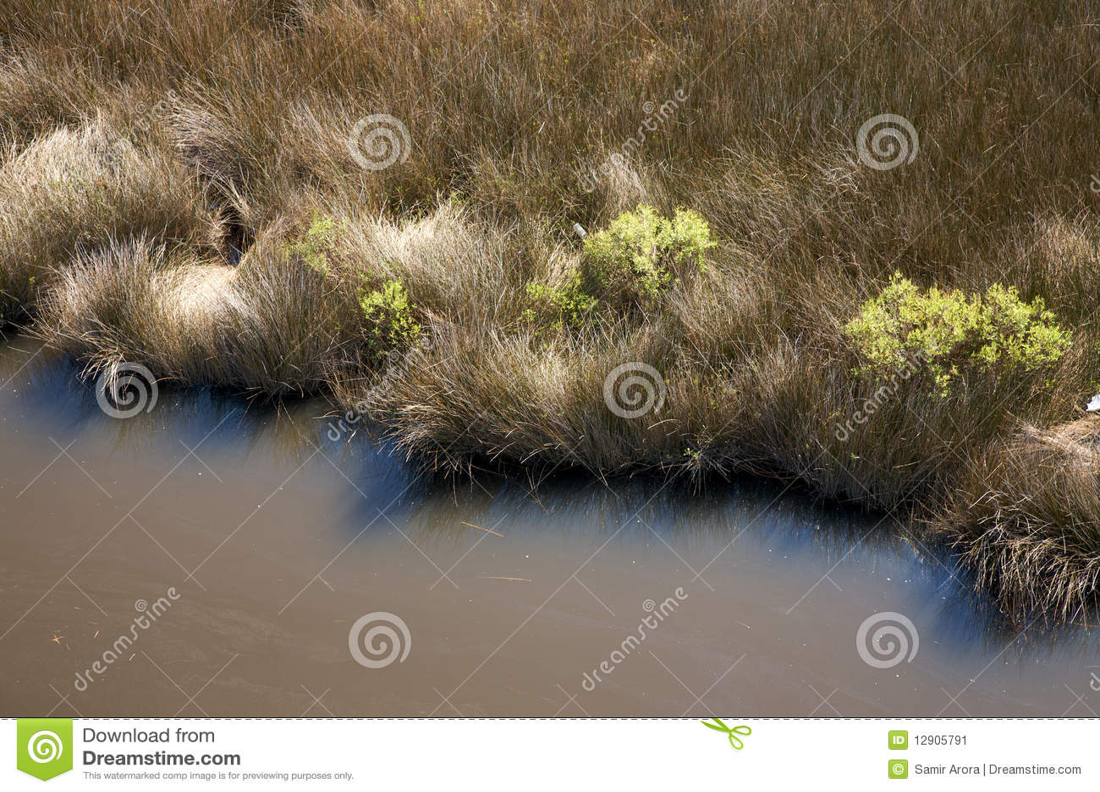 Zout moeras, Noord-Carolina
