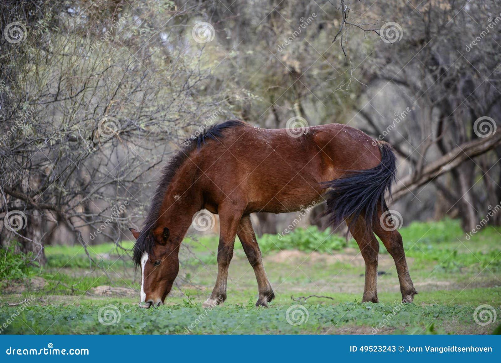 Zout Rivierwild paard in het bos