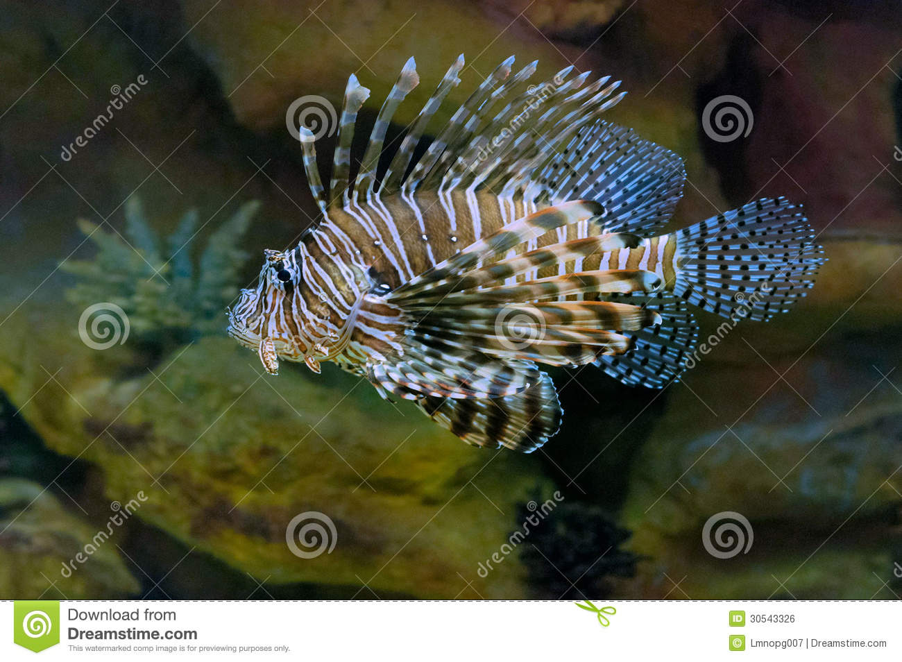 Zoutwater Lion Fish