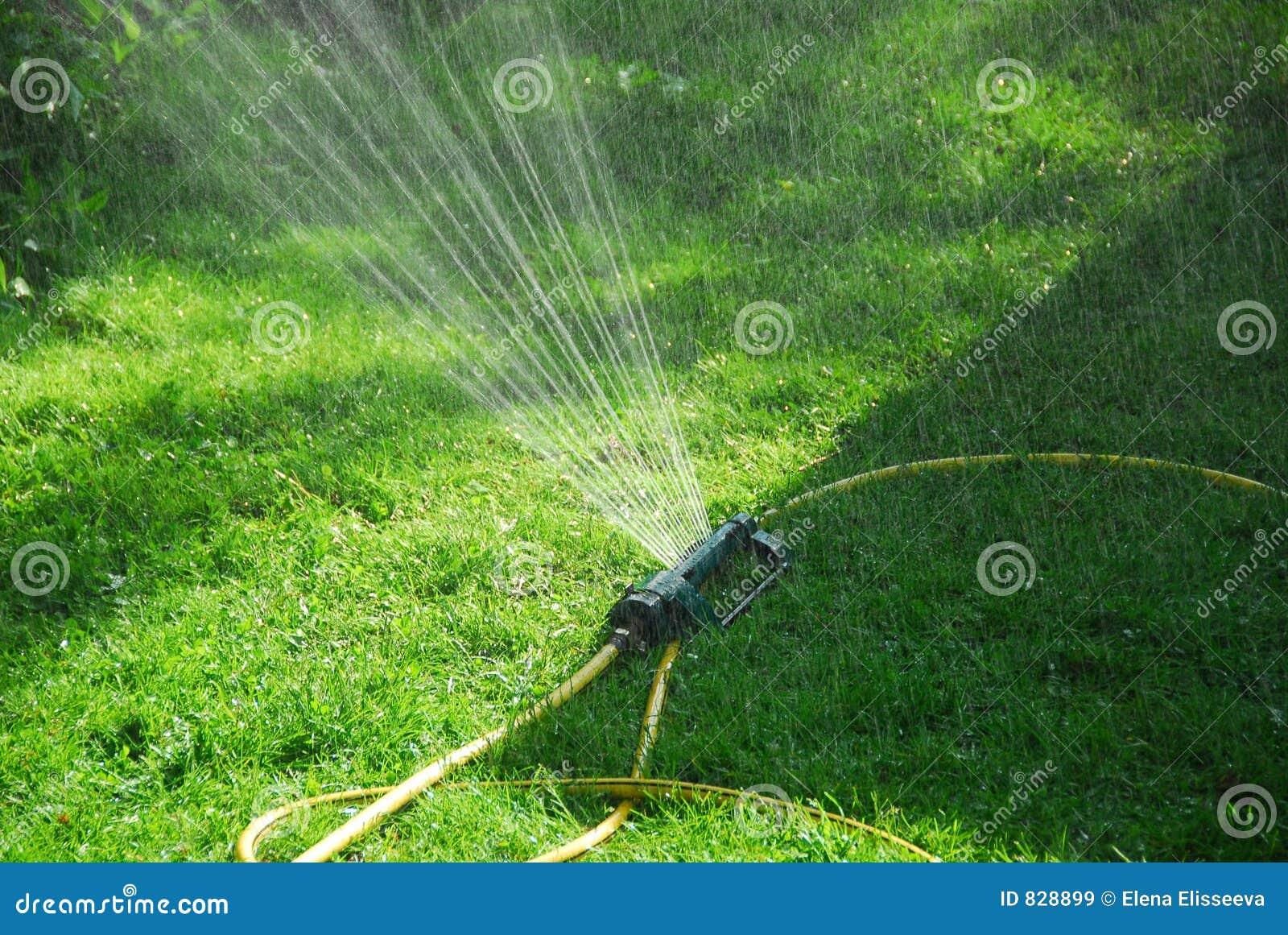 Zraszaczy trawnika