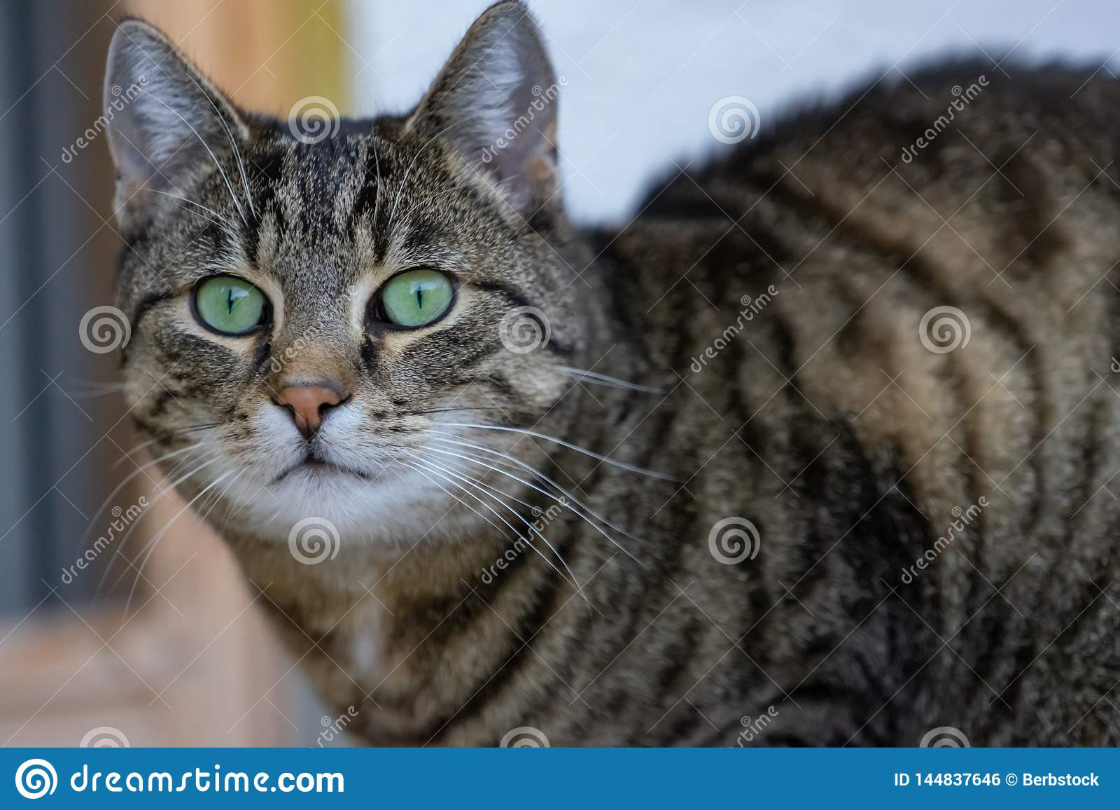 Zrelaksowany kot patrzeje kamerÄ™ w domu