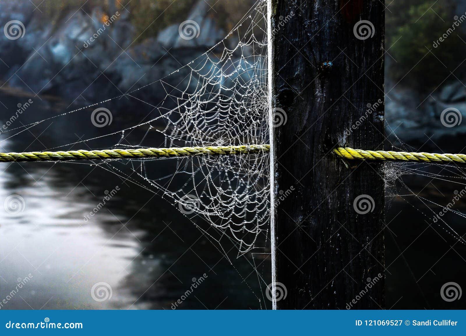 Zroszona pajęczyna na arkanie