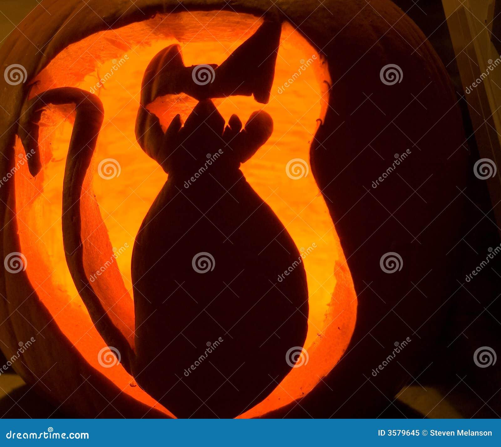 Zucca Halloween Gatto.Zucca Halloween Gatto Beemsterdorpsraden