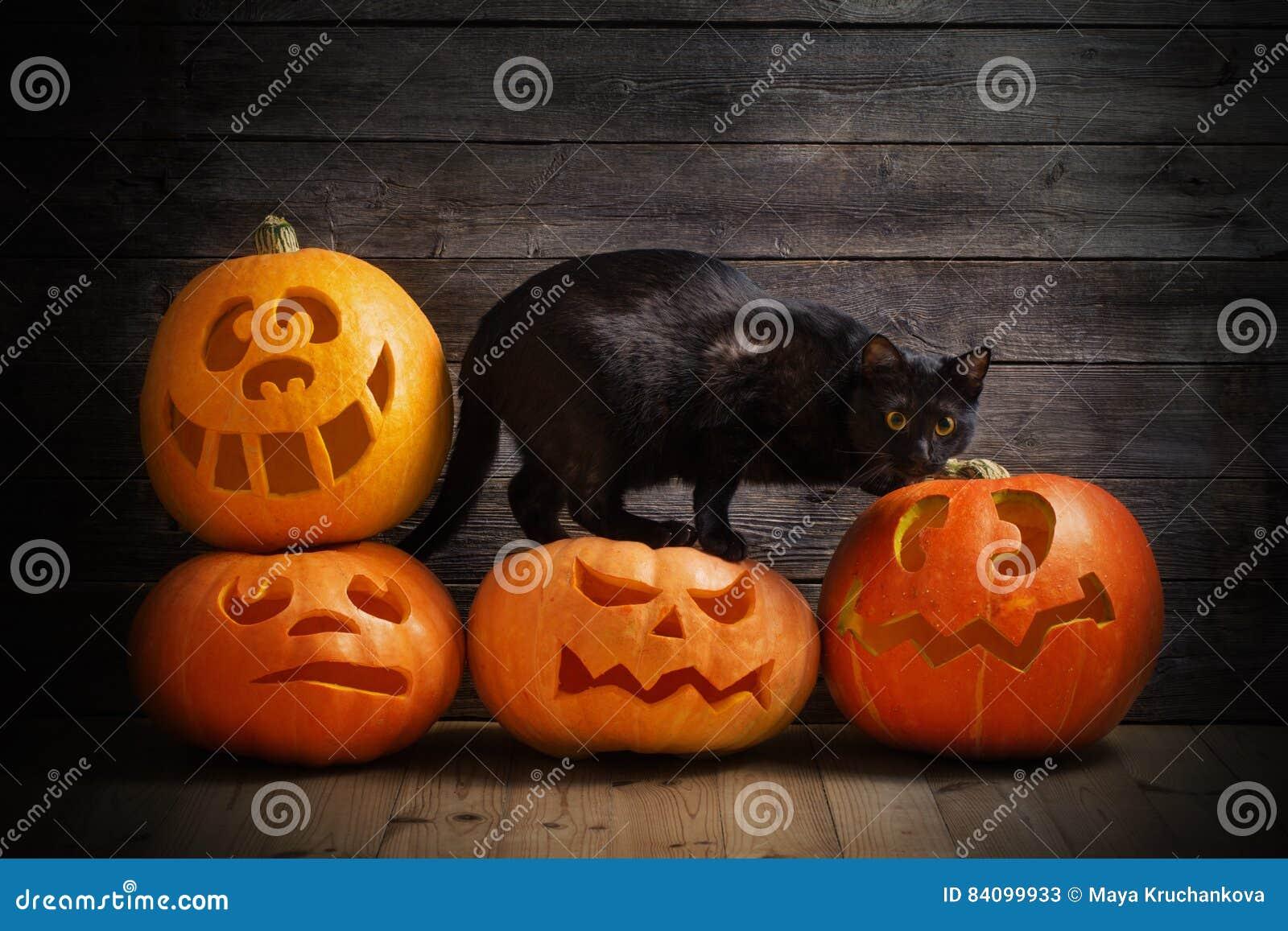 Zucca Halloween Gatto.Zucca Di Halloween E Gatto Nero Immagine Stock Immagine Di Testa
