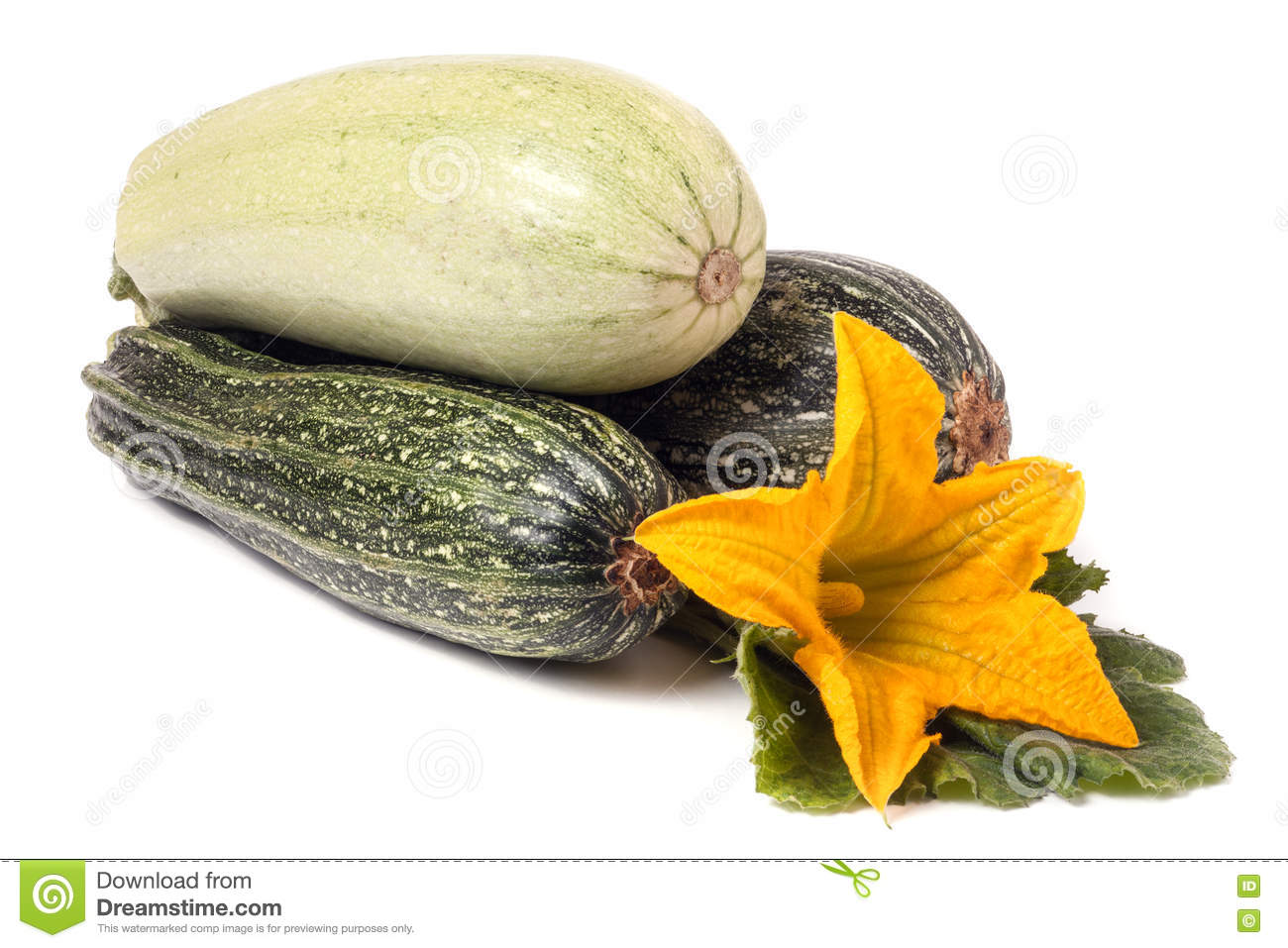 Zucchini and squash with flower leaf isolated on white background zucchini and squash with flower leaf isolated on white background mightylinksfo