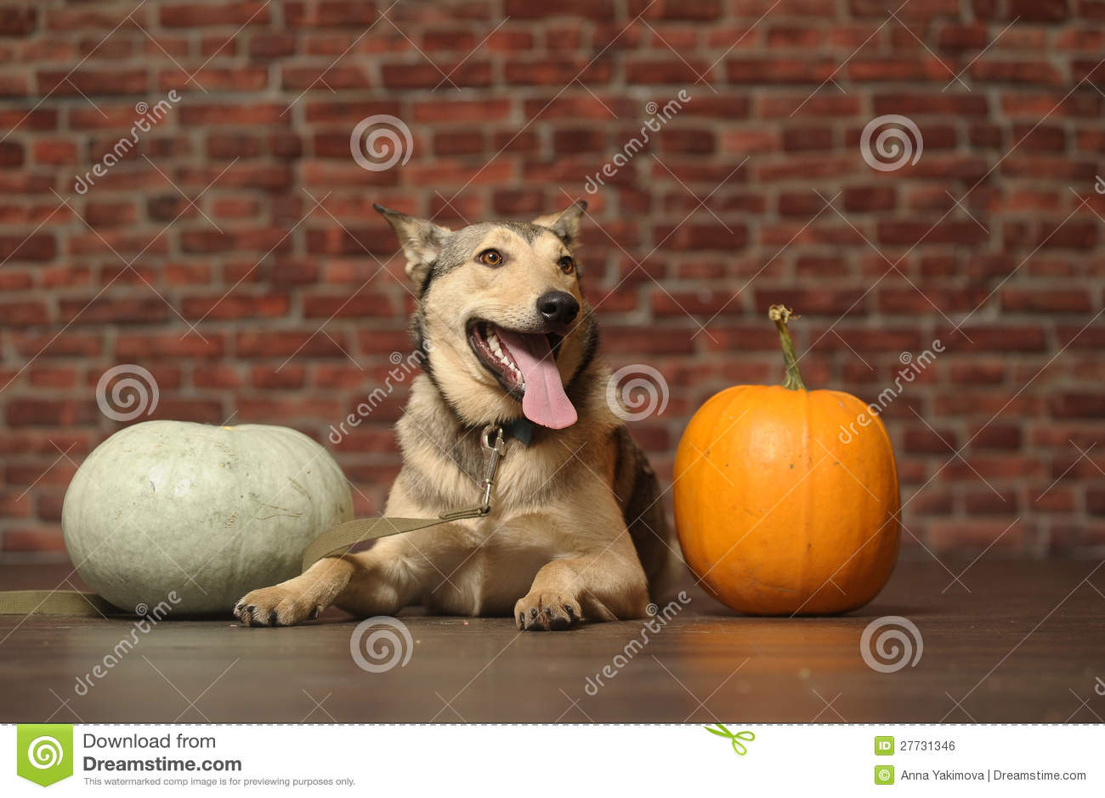 Zufrieden gestellter Hund