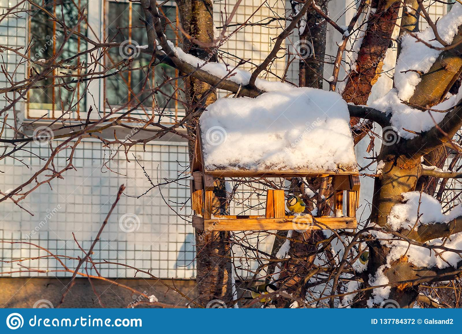 Zufuhr für Vögel in der Winterstadt, Meise isst Nahrung