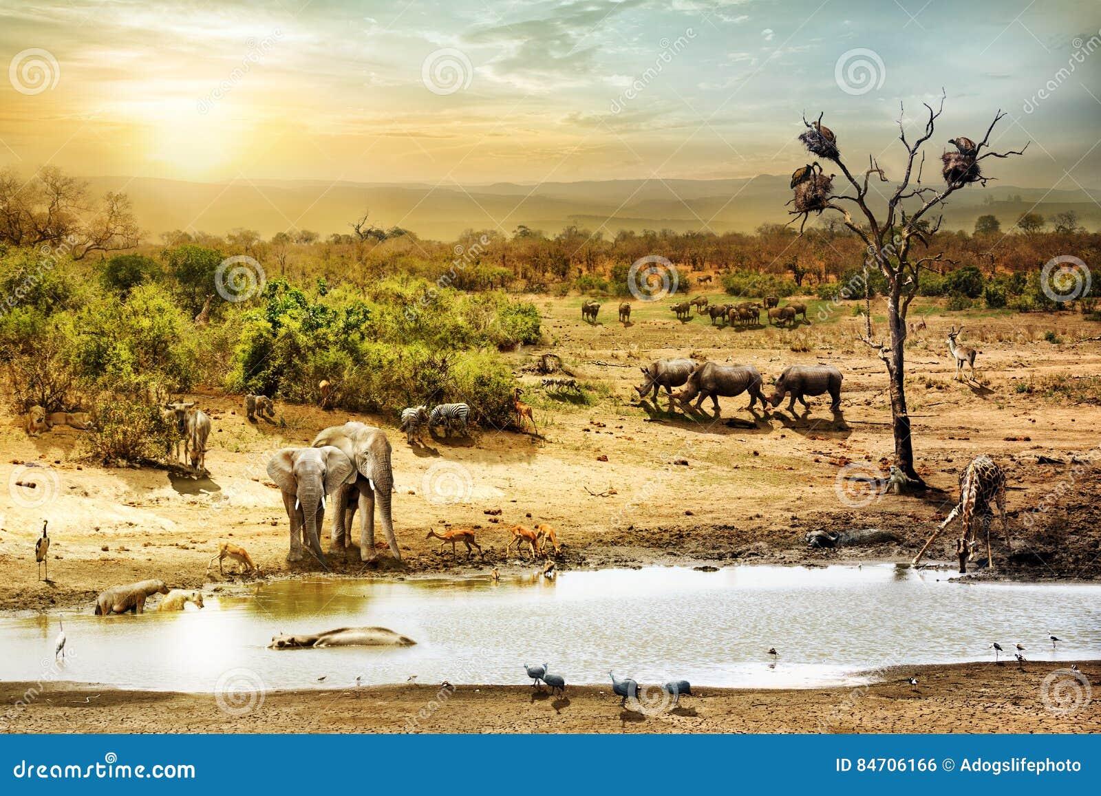 Zuidafrikaanse Safari Wildlife Fantasy Scene