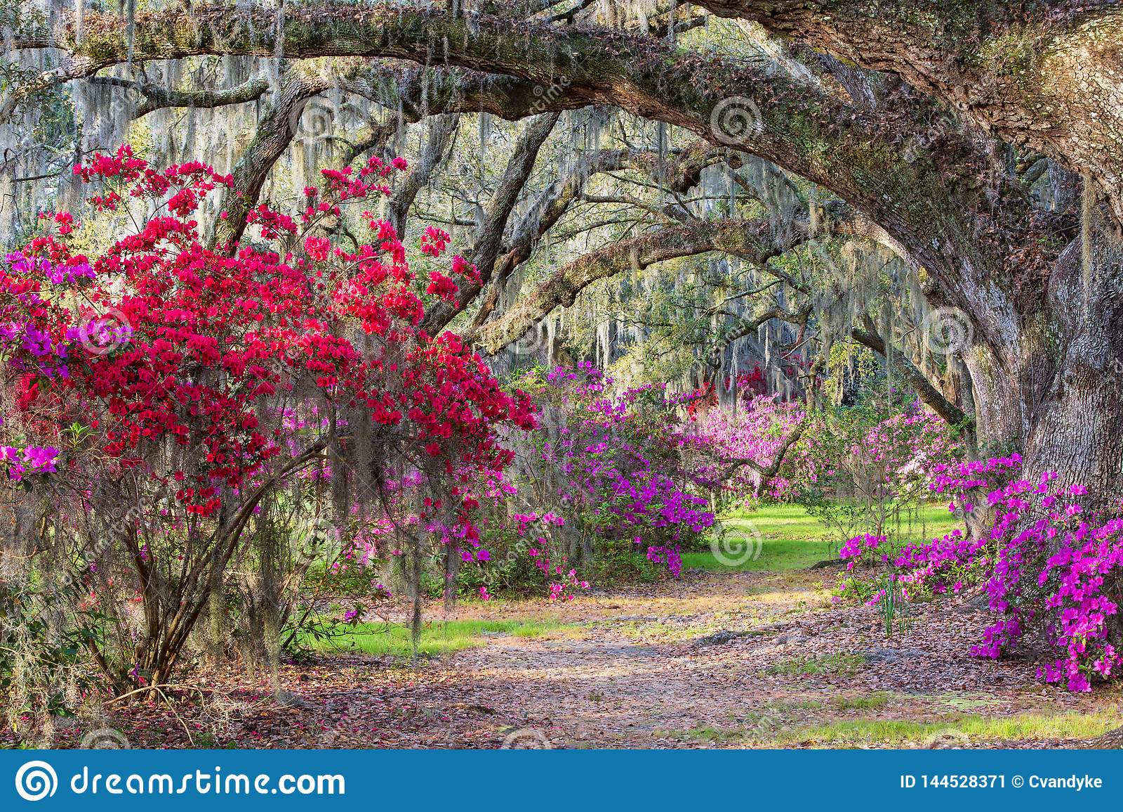 Zuidelijke Azalea Garden South Carolina
