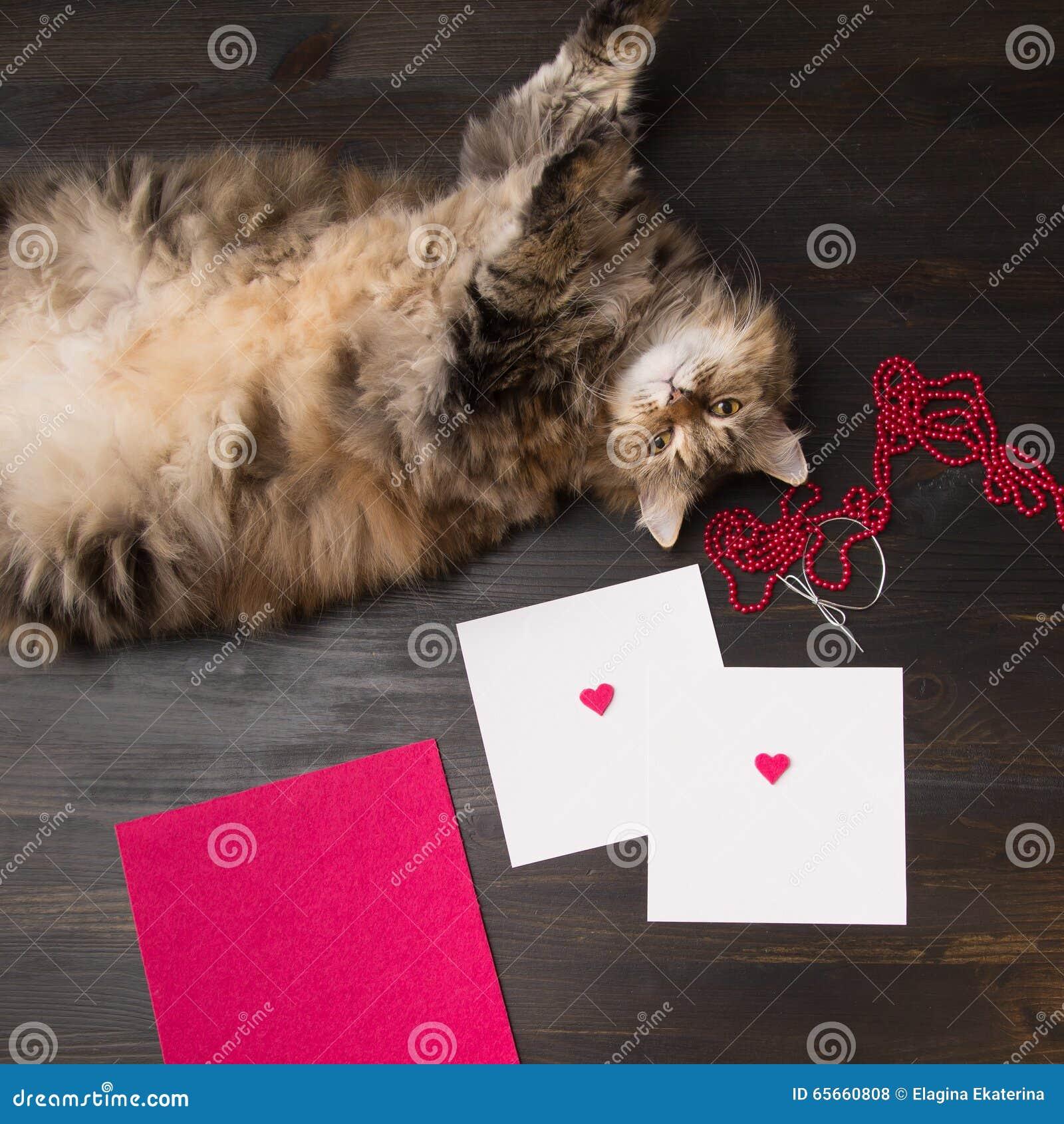 Zusammensetzung Mit Katze Und Zwei Leere Karten Mit Filzherzen Auf ...