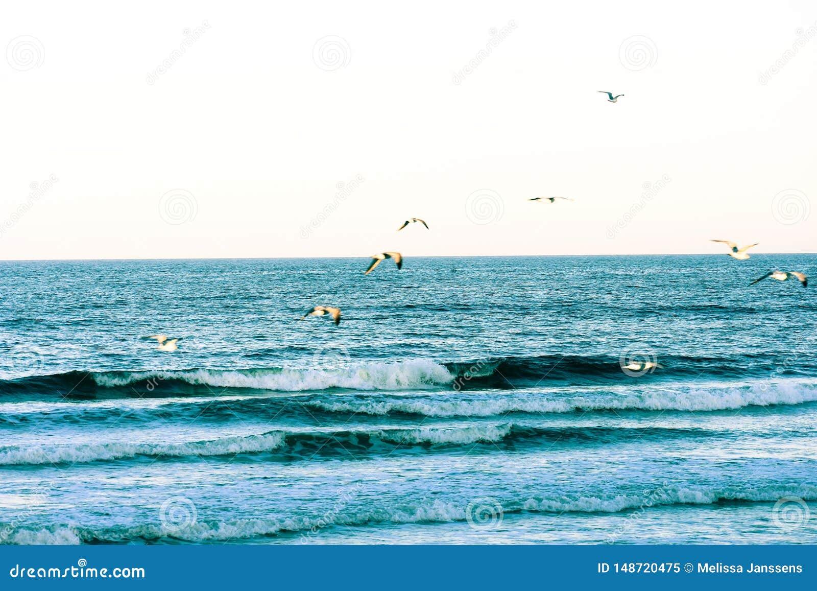 Zusammensto?ende blaue Wellen und Seem?wen entlang der K?ste von Florida-Str?nden in Ponce-Einlass und in Ormond-Strand, Florida