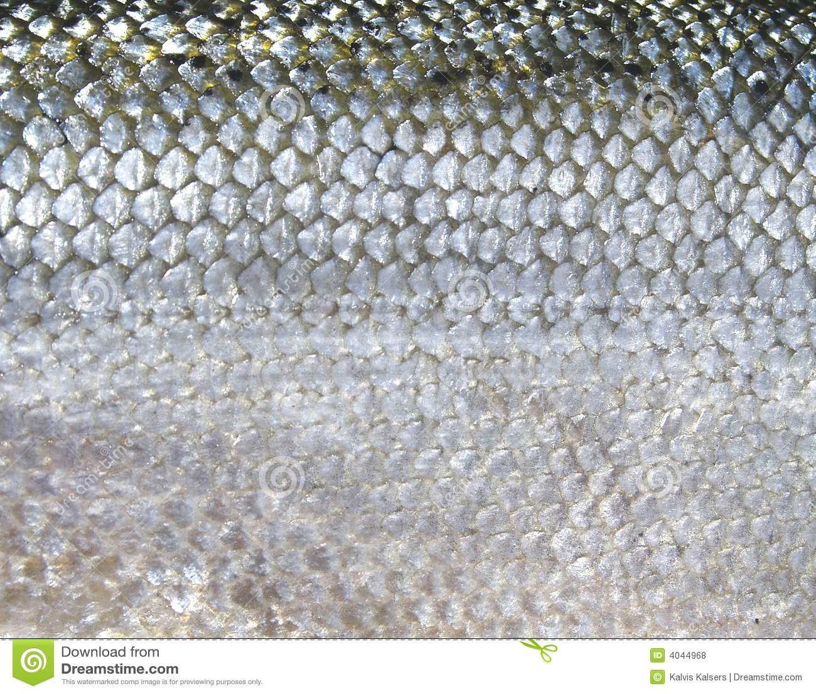 Zważyć ryb