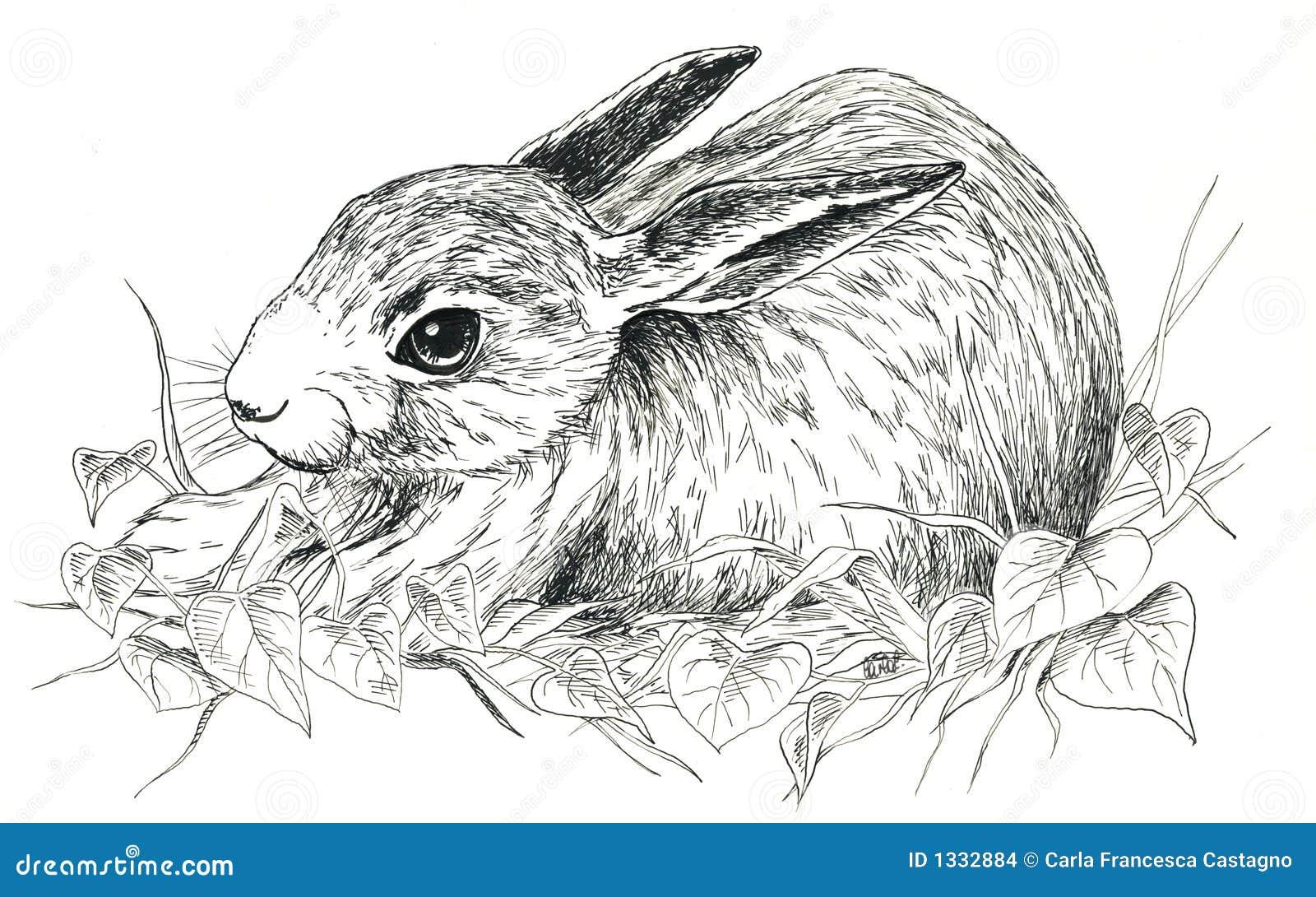 Zwart & wit konijn