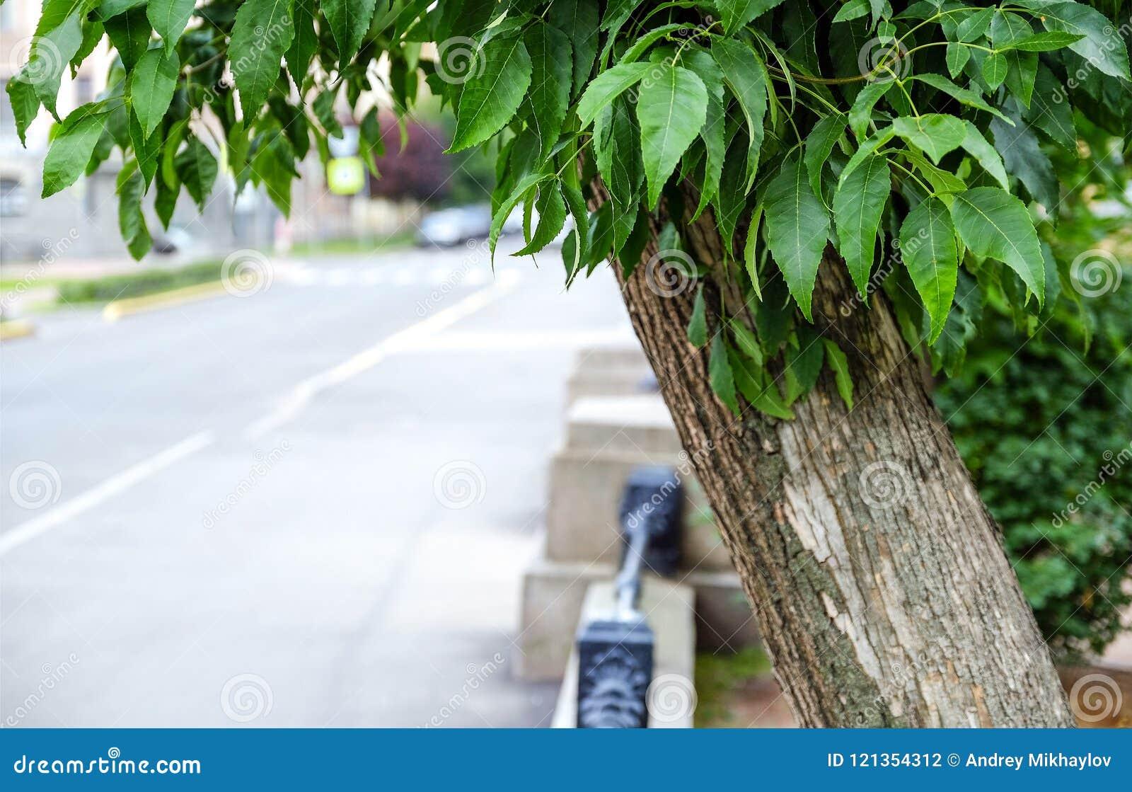 Zwart, gesmeed, gaat het metaaltraliewerk op een lage Zandsteenmuur in de afstand achteruit Het gras en de bomen kunnen door het
