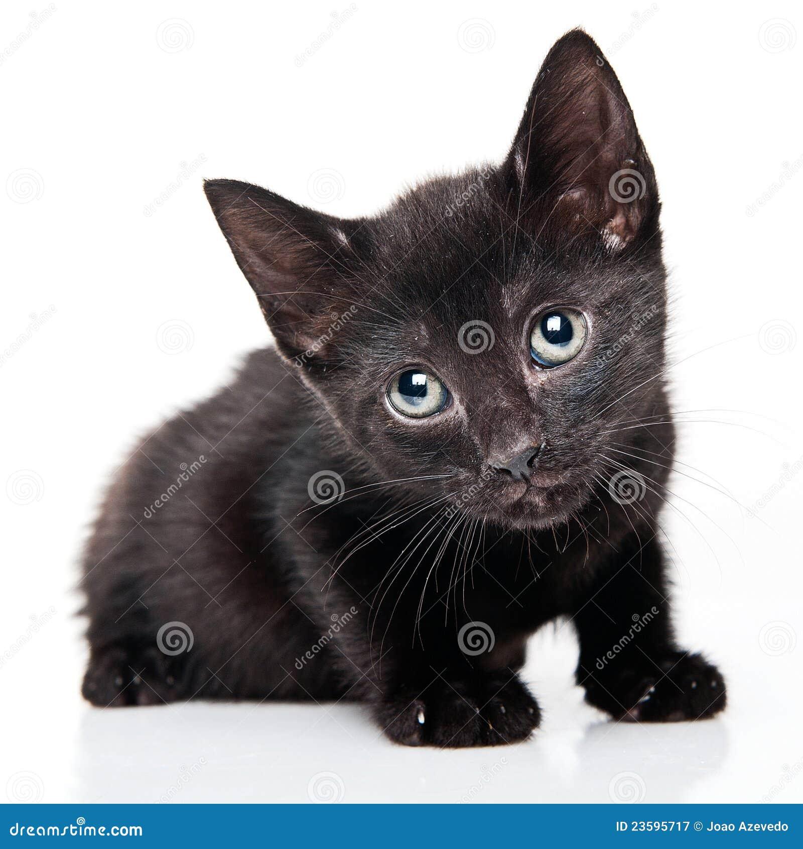 Zwart poesje Fotos com