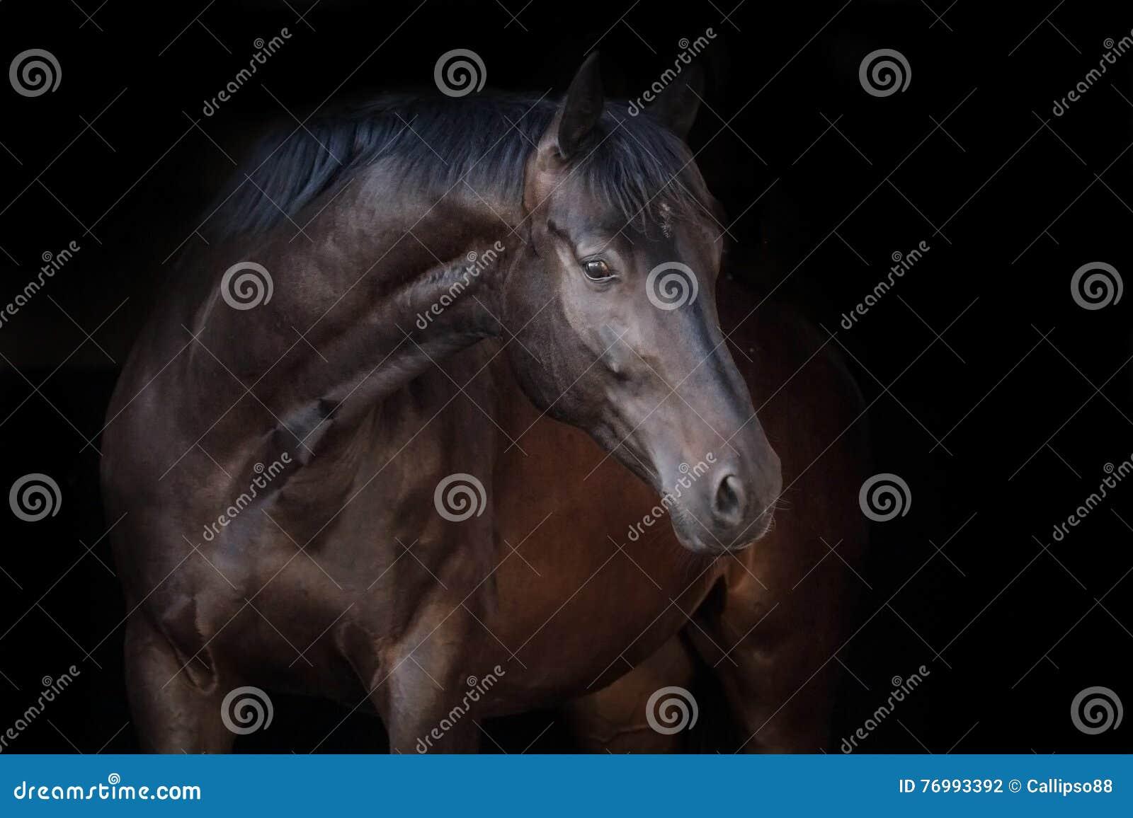 Zwart paard op zwarte