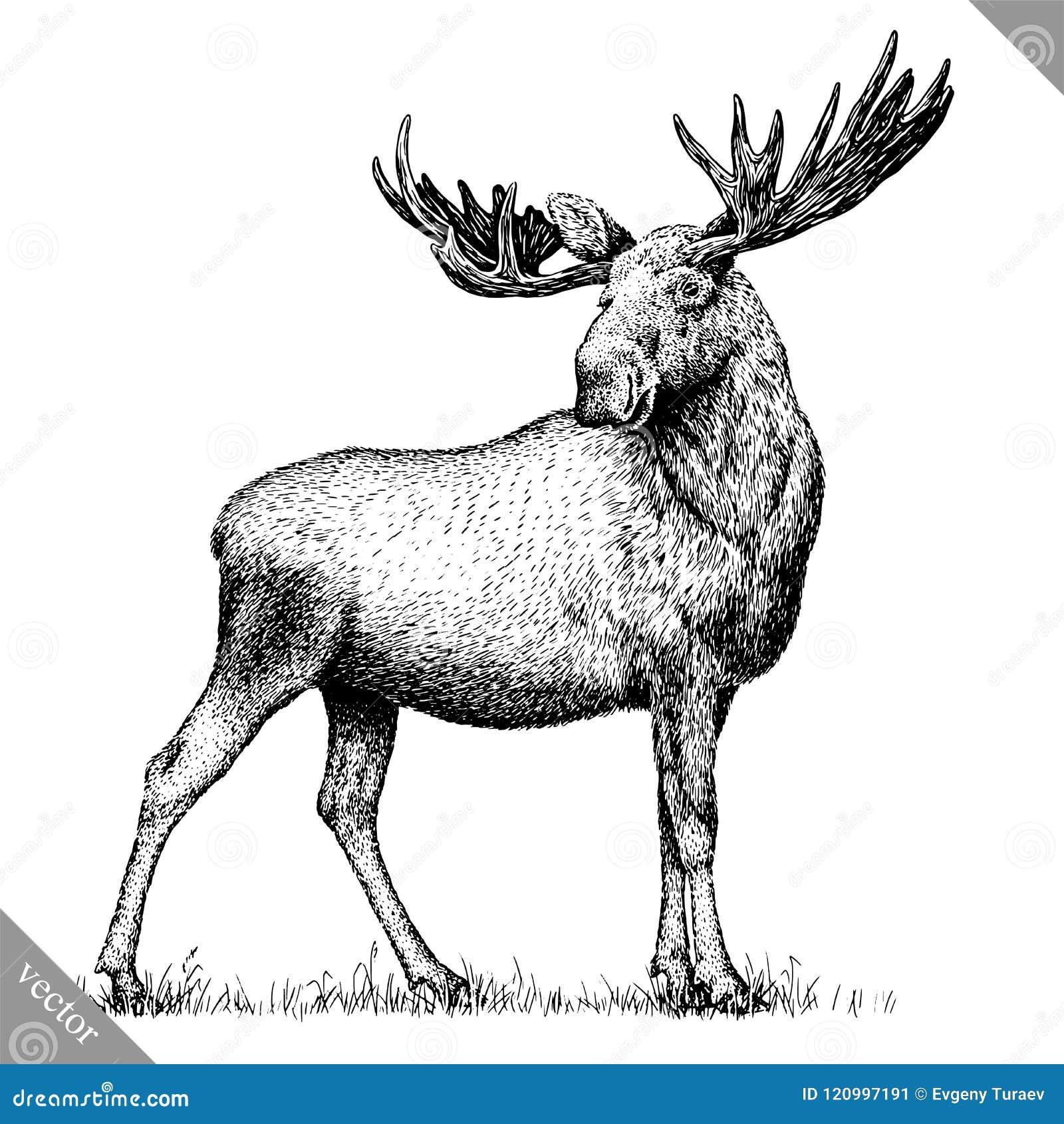 Zwart-wit graveer geïsoleerde elandenhand trekken vectorillustratie