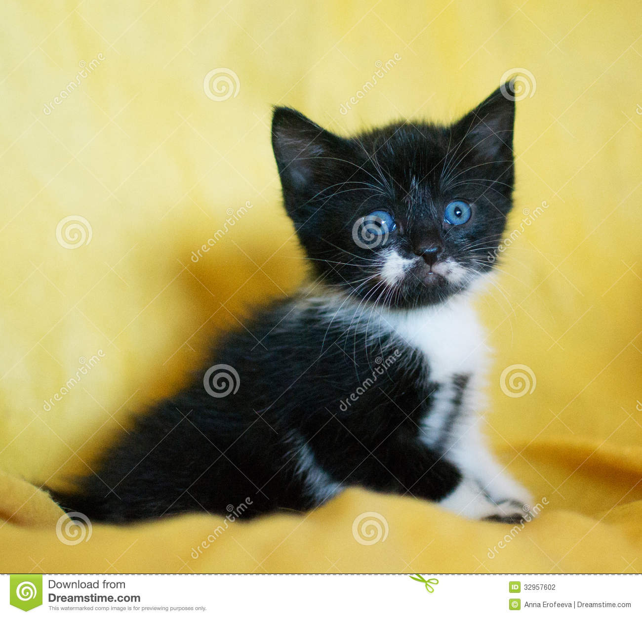 Cute Cats Withblue Eyes