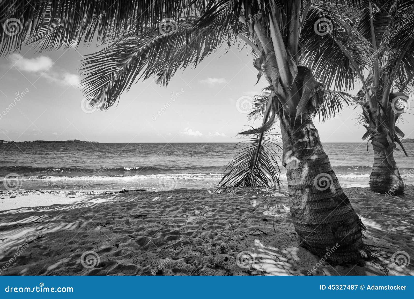Zwart-wit Tropisch Strand Stock Foto - Afbeelding: 45327487