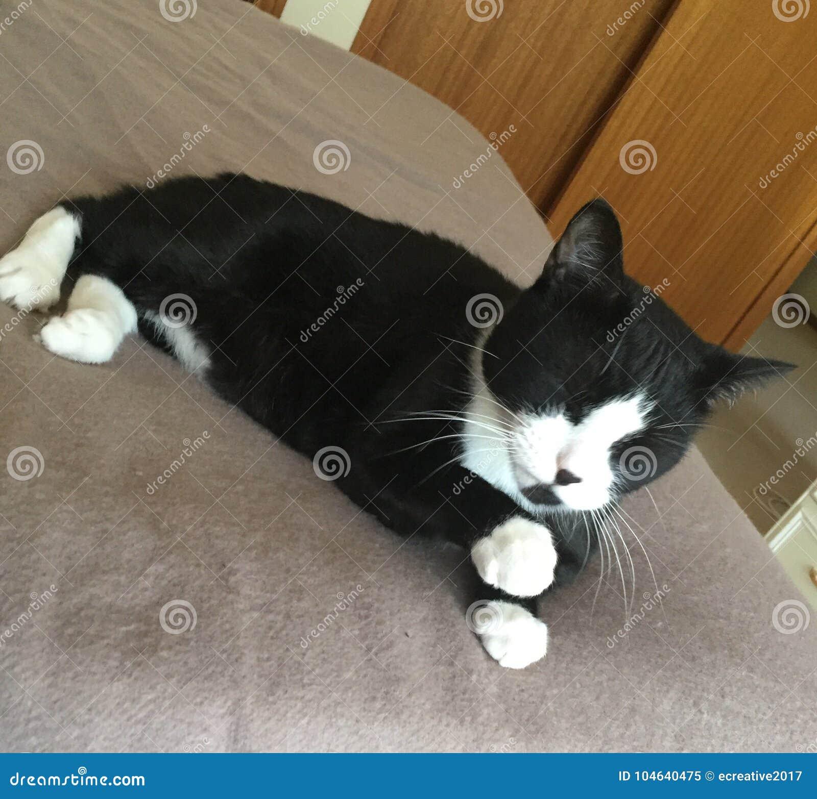 Download Zwart-wit | Witte Sokken | Leuke Kattenslaap Stock Afbeelding - Afbeelding bestaande uit sokken, helder: 104640475