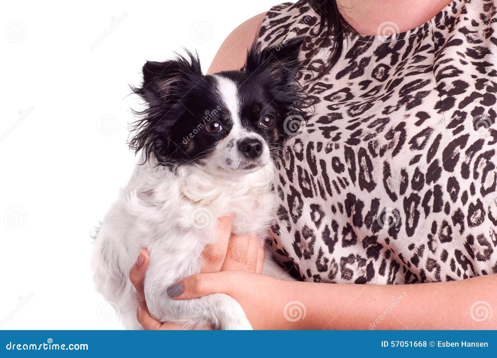 Zwart-witte chihuahua van de toebehorenhond met haar eigenaar