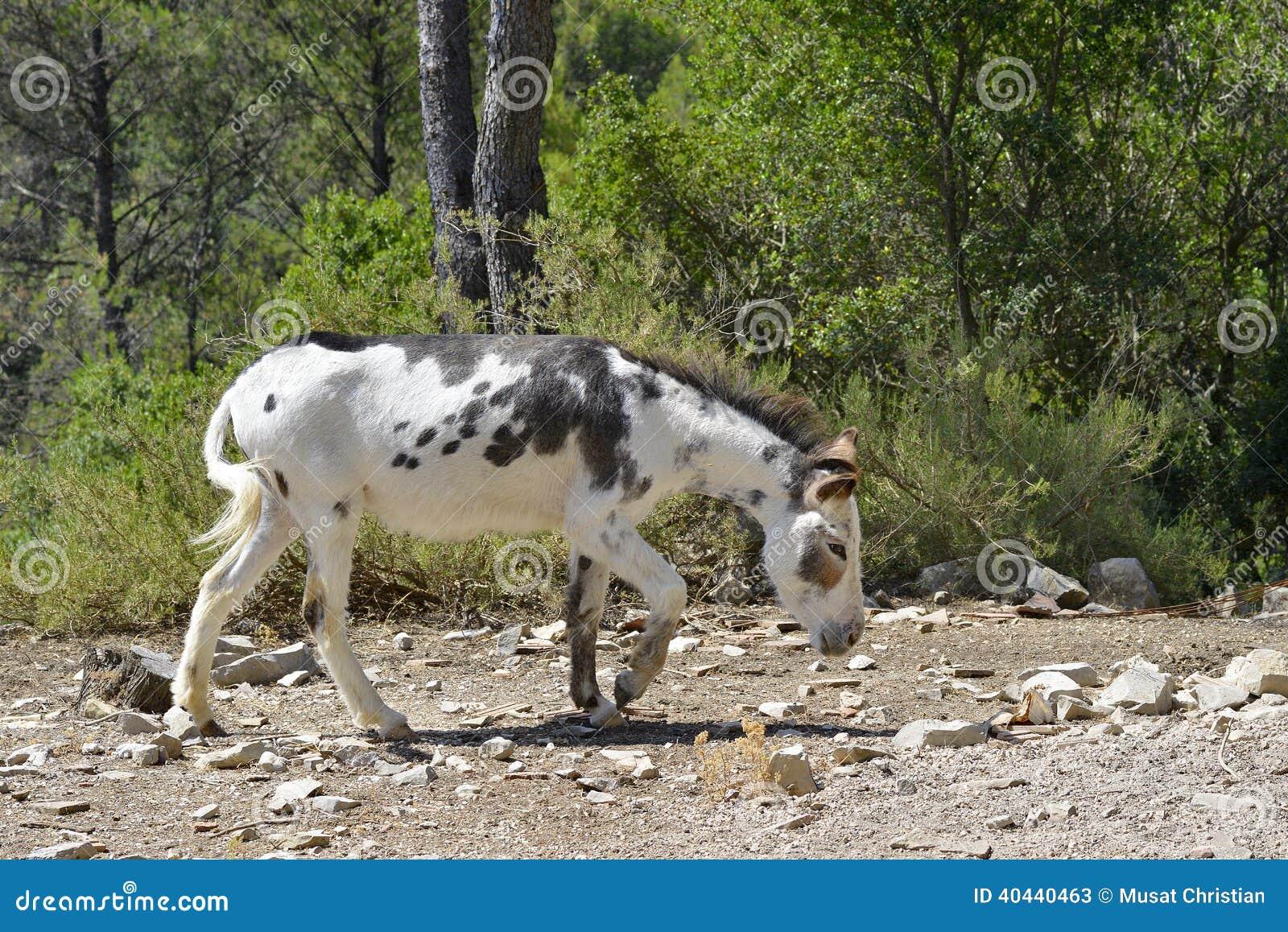Zwart-witte ezel