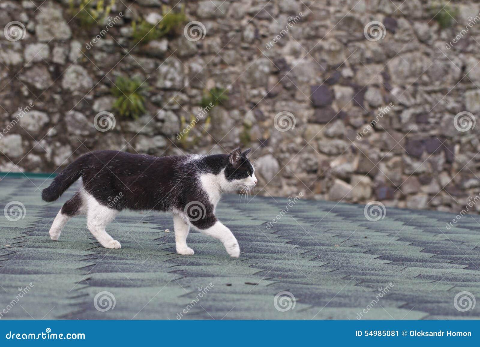 Zwart-witte kat op het dak