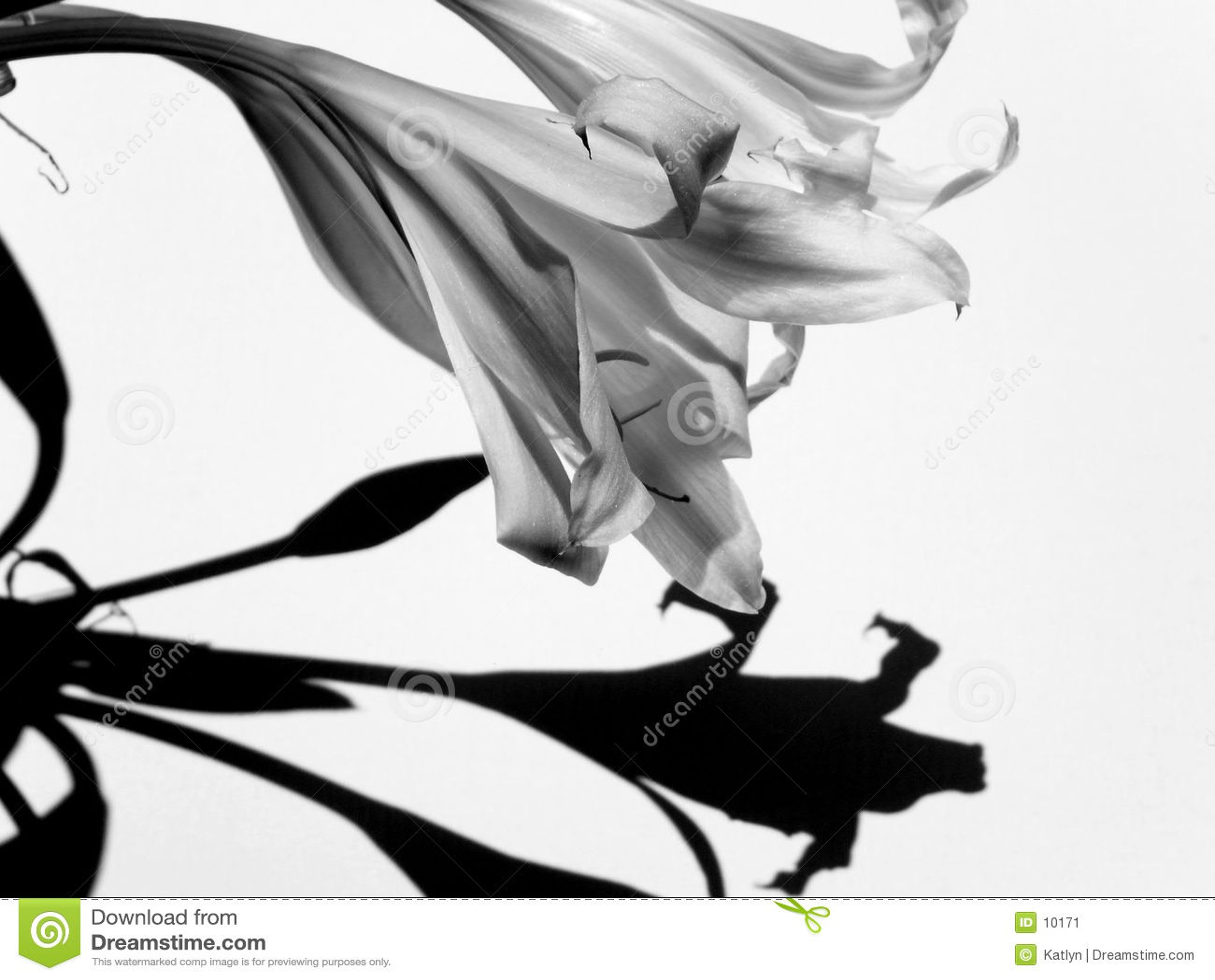 Zwarte & Wit