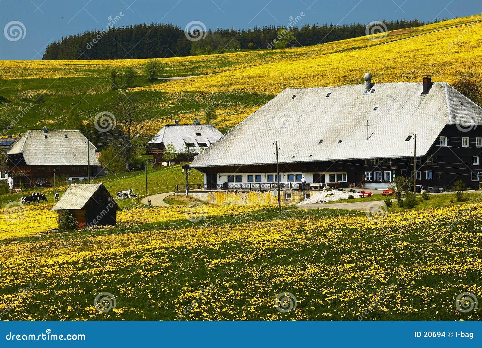 Zwarte bosboerderij in de zomerweide