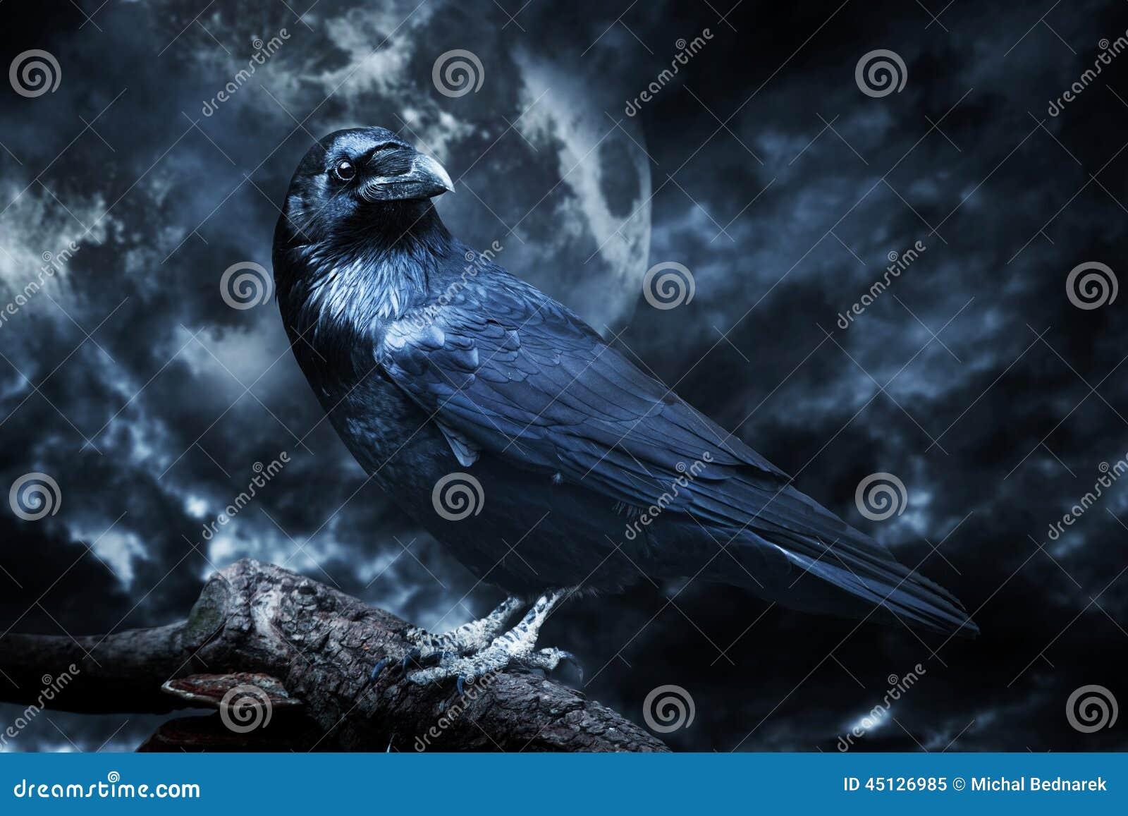 Zwarte die raaf in maanlicht op boom wordt neergestreken