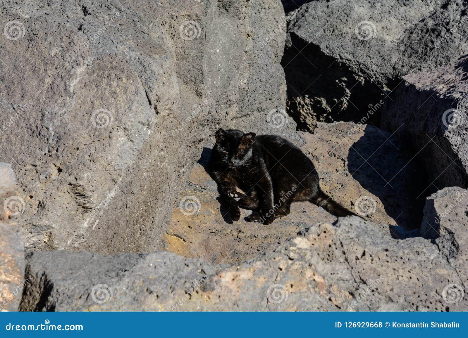 Zwarte ernstige kat op zwarte vulkanische stenen Royalty-vrije Stock Foto's