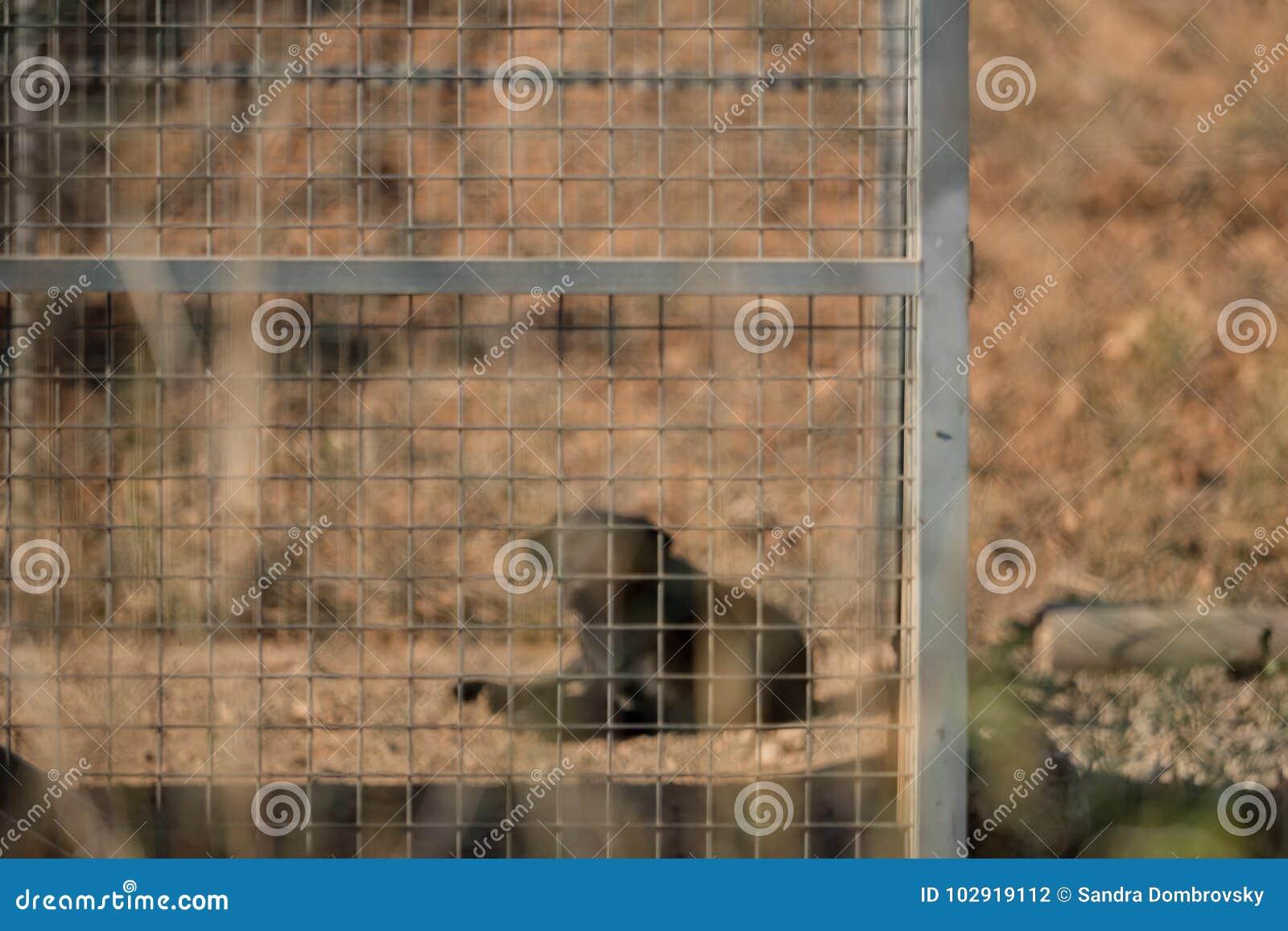 Zwarte hond in de kennel