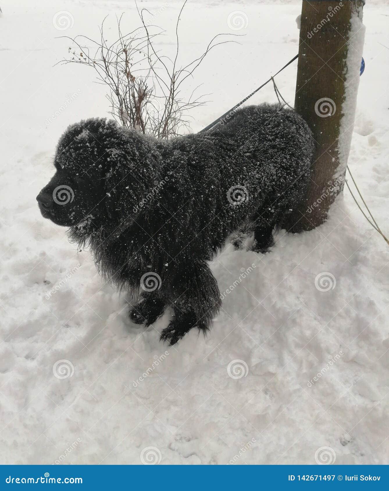 Zwarte hond op witte sneeuw