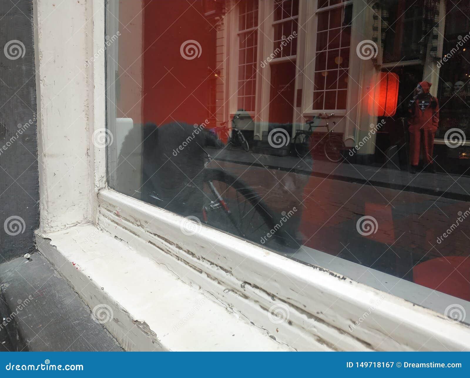 Zwarte kat in het venster