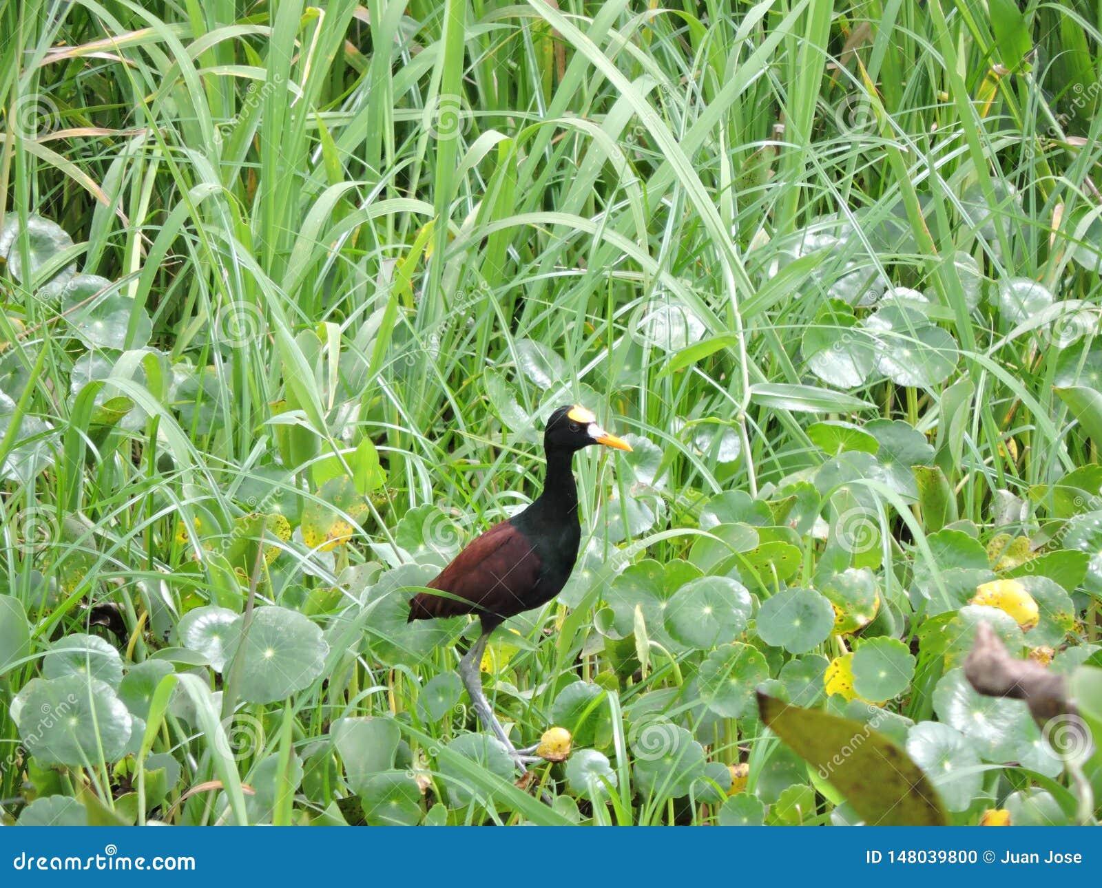 Zwarte vogel bij meer